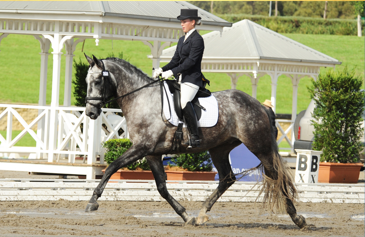 Partbred Andalusians